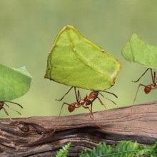 We can learn a lot from ants