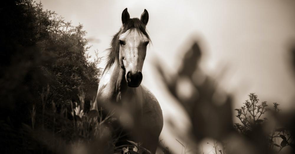 The pale horse of pestilence