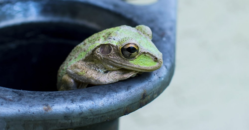 The frog in the pot