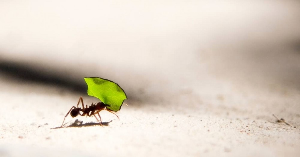 Learning from the ants